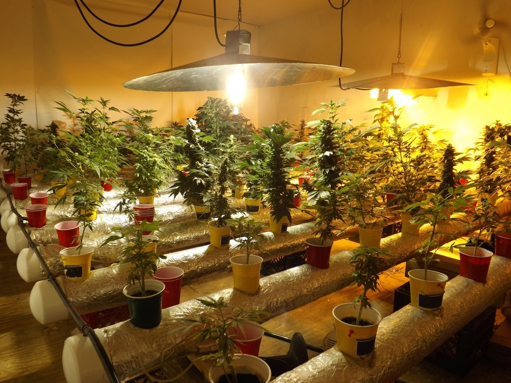 Huge Marijuana Grow Room Client Gets Probation